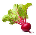 Beetroot  isolated Royalty Free Stock Photo