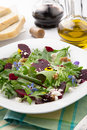 Beets and baby greens salad with walnuts goat cheese organic Royalty Free Stock Images