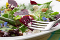 Beets and baby greens salad with walnuts goat cheese organic Royalty Free Stock Photo