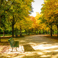 Beginning autumn tiergarten berlin Royalty Free Stock Photos