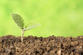 Beginning of a new life seedling is growing in the dirt concept Stock Photography
