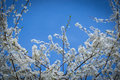 Beginning of Spring with blue sky Royalty Free Stock Photo