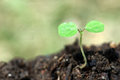 The beginnings in soil plant Royalty Free Stock Photography