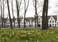 Beguinage of bruges and daffodils in early spring Royalty Free Stock Images
