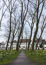 Beguinage of bruges and daffodils in early spring Stock Image