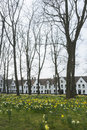 Beguinage de bruges et de jonquilles Photographie stock