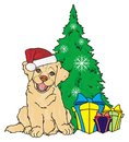 Puppy and christmas time Royalty Free Stock Photo