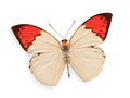 Beige and red butterfly isolated