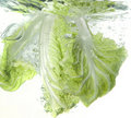 Beijing cabbage in water splash Stock Photos
