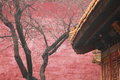 Beijing tree a against a wall in the forbidden city china Royalty Free Stock Photos