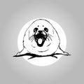 Belek a baby seal
