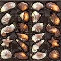 Belgian chocolate pralines set in box Royalty Free Stock Photo