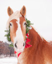 Belgian draft horse wearing a christmas wreath blond Royalty Free Stock Images