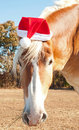 Belgian Draft horse wearing a Santa hat Stock Photography