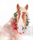 Belgian draft horse with a wreath and bow dreamy christmas themed image of Stock Image