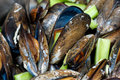 Belgian style mussels Royalty Free Stock Photos