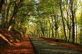 Belgrad Forest Royalty Free Stock Photo