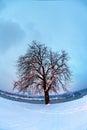 Belgrade fortress and Kalemegdan park with snow Royalty Free Stock Photo