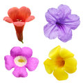 Bell Flower Set Royalty Free Stock Photo