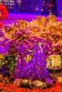 Bellagio hotel Botanical Garden Royalty Free Stock Photo