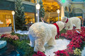 Bellagio hotel conservatory botanical gardens las vegas dec winter season in on december in las vegas there are five seasonal Stock Photos