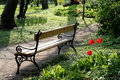 Belles tulipes et un banc Photos stock