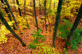 Bello autumn illinois landscape Fotografia Stock