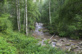 Belokurikha river in the forest on the hillside sinyuha altai krai Stock Photos