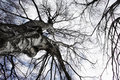 Below birch tree Στοκ φωτογραφίες με δικαίωμα ελεύθερης χρήσης