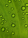 Below a Large Leaf Royalty Free Stock Photo