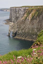 Bempton Cliffs, Humberside Royalty Free Stock Image
