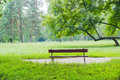 Bench against a background of a glade in the park Royalty Free Stock Photo