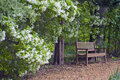 Bench along path with bush in bloom inviting to rest Stock Photo