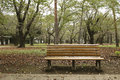 Bench autumn park it is a that accumulate the of fallen leaves Stock Photography