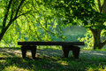 Bench on the bank of the lake in summer day Royalty Free Stock Photo