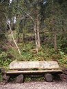 Bench in a colorful Summer wood