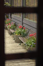 Bench and flowers from wooden window frame a Royalty Free Stock Photography