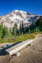 Bench and mount rainier rustic along a trail at national park washington Stock Photo