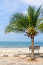 Bench near beach with green coconut tree Royalty Free Stock Photos