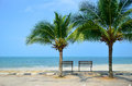 Bench near beach with green coconut tree Stock Images