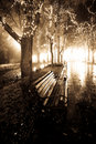 Bench in night alley with lights in Odessa, Ukrain Royalty Free Stock Images