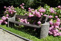 Bench in the park with flowers Stock Photo