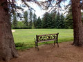 Bench and park in the summer time with trees meadow Royalty Free Stock Photography