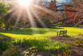 Bench in the park at Sunset Royalty Free Stock Images