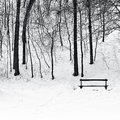 Bench in park in winter a a the Stock Image
