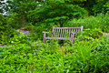 Bench in Plant Trail Royalty Free Stock Photo