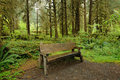 Bench in rain forest Stock Photos