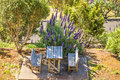 Bench seat with table for picnic in the wildness on island of madeira pride of madeira flower aside Stock Photography