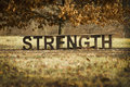 A bench of strength in the fall an inspirational message with word spelled out leaves Royalty Free Stock Photo