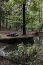 Lavice stôl strom najbližšie rybník